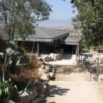 בית כנסת ציפורי